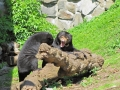 Edinburgh Zoo