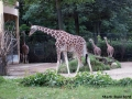 Frankfurt Zoo