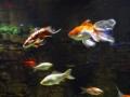 St Andrews Aquarium