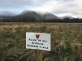 Dalmally No Highland Cattle