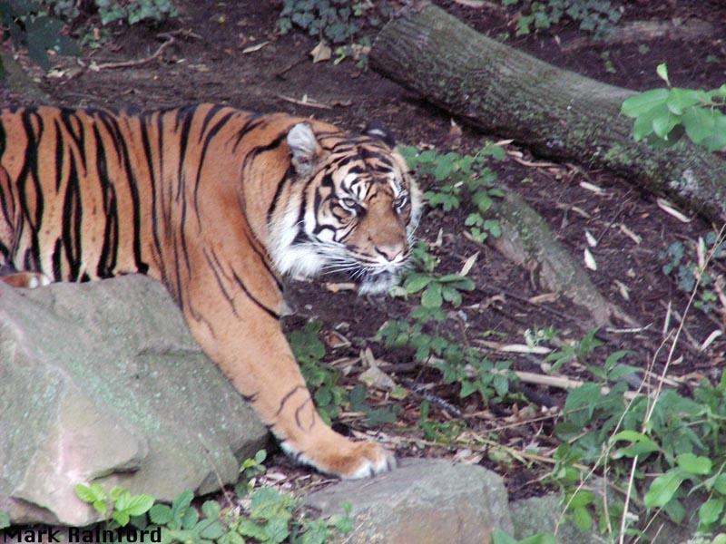 Frankfurt Zoo Cludgie Photos N Stuff