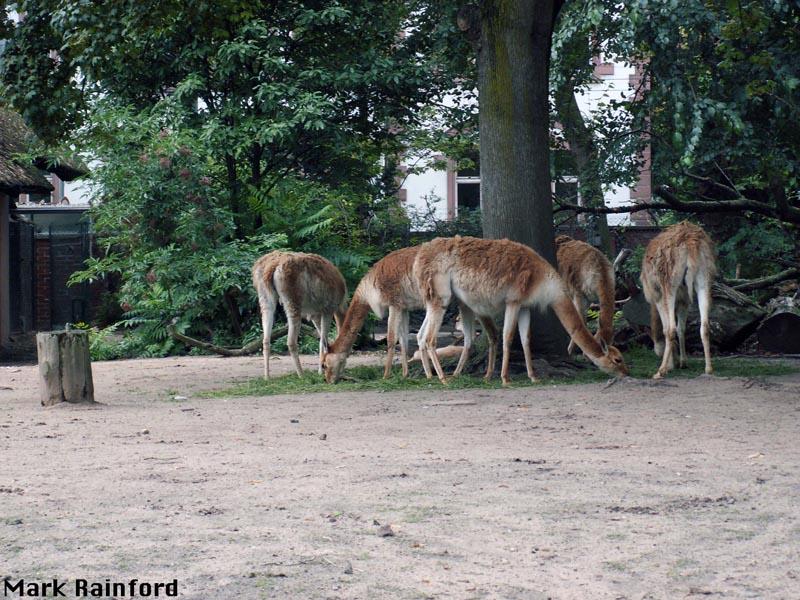 frankfurt zoo cludgie photos 39 n stuff. Black Bedroom Furniture Sets. Home Design Ideas